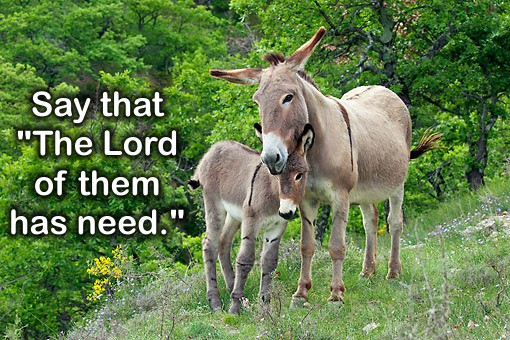 The Lord of the Donkey (a pre-Easter thought)